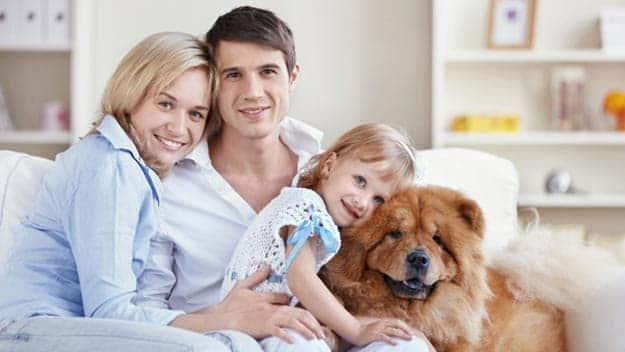 Wills & Trusts dog-young-family Direct Wills Paddington